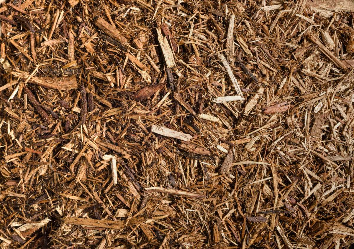 Western red cedar mulch greendell landscape solutions