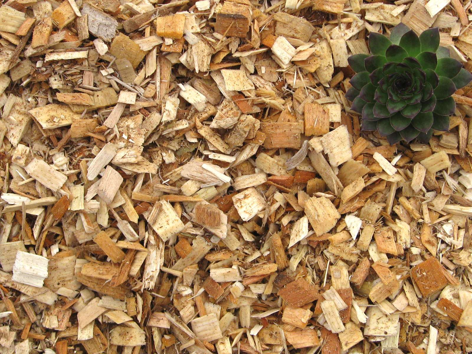 Wood Chips For Landscaping ~ Wood chips greendell landscape solutions